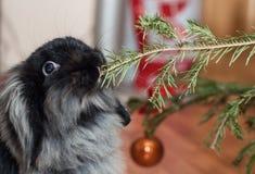 Portret van konijn het eten Stock Afbeeldingen