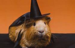 Portret van leuk rood proefkonijn in Halloween-kostuum royalty-vrije stock fotografie