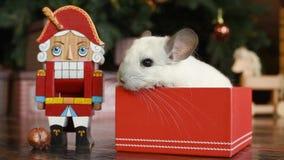 Portret van leuke witte chinchilla op de achtergrond van de Kerstboom in de lichten stock videobeelden