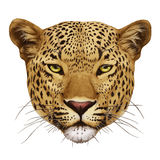 Portret van luipaard vector illustratie