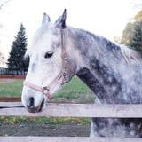 Portret van mooi paard in paddock Royalty-vrije Stock Afbeeldingen