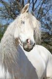 Portret van mooie $ce-andalusisch merrie in de lente stock afbeelding