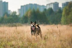 Portret van mooie gelukkige hond, bekijkend camera, die zich in een zonnige weide bevinden Royalty-vrije Stock Foto's
