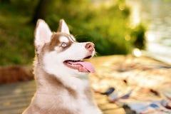 Portret van mooie hond stock fotografie