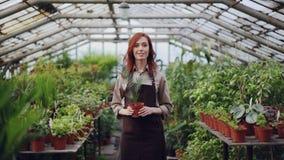 Portret van mooie jonge vrouwenlandbouwer in schort die zich binnen serre, het houden van potteninstallatie en het glimlachen bev stock footage