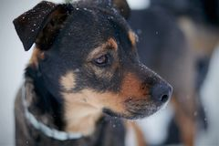 Portret van niet rashond Royalty-vrije Stock Foto