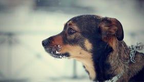 Portret van niet rashond Stock Foto