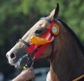 Portret van paard. Stock Foto's