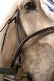 Portret van paard Stock Foto