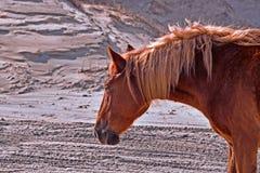 Portret van Paard Corolla stock foto's