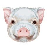 Portret van Piggy royalty-vrije illustratie