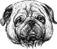 Portret van pug stock illustratie