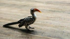 Portret van rood-Gefactureerde Hornbill-Vogel royalty-vrije stock afbeelding