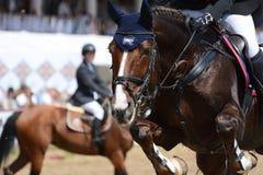 Portret van sportpaard in het springen Stock Fotografie