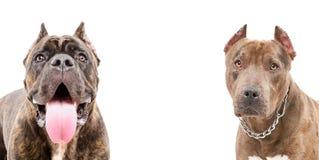 Portret van twee honden stock foto