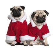 Portret van twee Pugs, gekleed in de laag van de Kerstman Royalty-vrije Stock Afbeelding