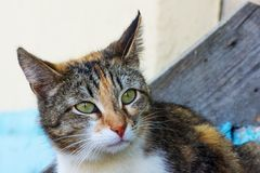 Portret van veelkleurig jong kattenclose-up Zoete vrouwelijke kat royalty-vrije stock foto's