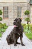 Portret van wachthond Royalty-vrije Stock Afbeelding