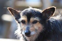 Portret van wat het onduidelijke beeldscherpte van de hondzon backlight royalty-vrije stock foto