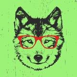 Portret van Wolf met glazen Royalty-vrije Stock Foto's