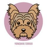 Portret van Yorkshire terriër Stock Afbeeldingen