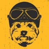 Portret van Yorkshire Terrier met Uitstekende Helm Royalty-vrije Stock Foto's