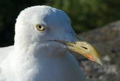 Portret van zeemeeuw op zonnige dag stock fotografie