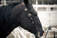 Portret van zwart paard Royalty-vrije Stock Fotografie