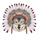 Portret wilk w wojennej czapeczce Zdjęcia Stock