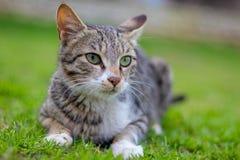 Portret zdziwiony kot obrazy royalty free