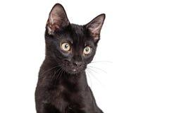 Portret Zwarte Kitten With Copy Space Stock Fotografie
