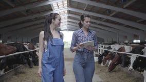 Portreta dwa dziewczyn rolnicy robi wycieczce turysycznej stajnia z krowami na gospodarstwie rolnym Dziewczyna rolnik pokazuje go zbiory