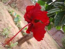 Portreta kwiat patrzeje zadziwiającym obrazy stock
