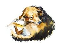 Portreta pies Akwareli ręka rysująca ilustracja ilustracja wektor