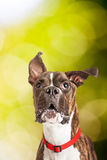 Portreta psa Outdoors - Vertical Z kopii przestrzenią zdjęcia royalty free