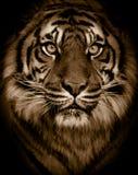 portreta tygrys