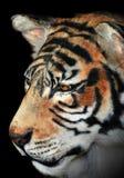 portreta tygrys Zdjęcia Royalty Free