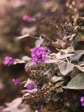 Portretbeeld van bloemen Stock Afbeeldingen