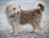 Portretfoto van de dakloze hond Ronny stock foto