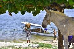 Portretten van de wereld Alagoas Brazilië royalty-vrije stock afbeelding