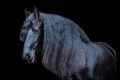 Portretten van paarden stock foto's
