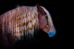 Portrety konie Zdjęcie Stock