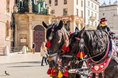 Portriats of horses in the Main Square in Krakow poland royalty free stock photography