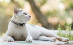 Porträt der Katze Lizenzfreie Stockfotos