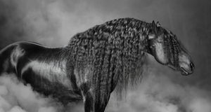 Porträt des schwarzen Frisianpferds mit der langen Mähne im Rauche Stockbild