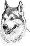 Porträt eines Schutzhundes Lizenzfreies Stockfoto