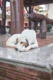 Porträt eines streunenden Hundes Stockfotografie
