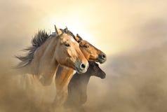 Porträt von Mustang drei Stockfoto