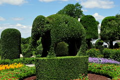 Portsmouth, RI: Elephant Topiary at Green Animals Stock Images
