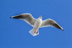 Portsmouth seagull Stock Photo
